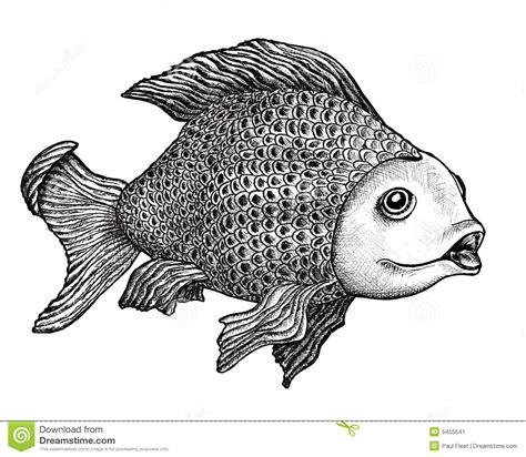 fish drawing stock illustration illustration  black