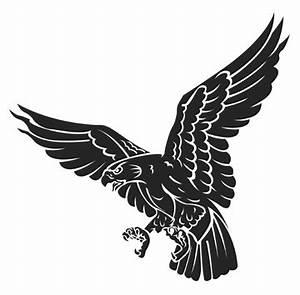 Clipart Hawk - Cliparts.co