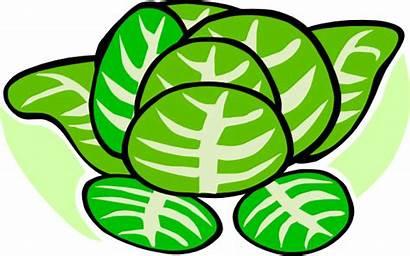 Cabbage Lettuce Patch Clipart Plant Vegetables Clip