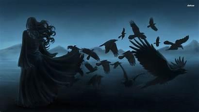 Raven Bird Desktop Wallpapers Mobile Ravens Birds