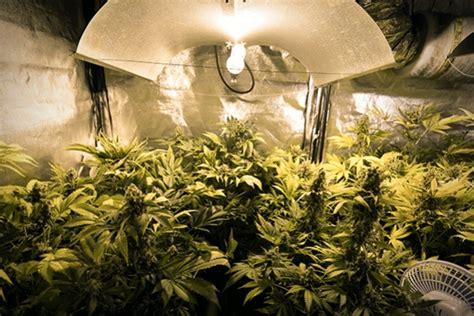 Anleitung Für Den Cannabisanbau Unter Künstlicher Beleuchtung