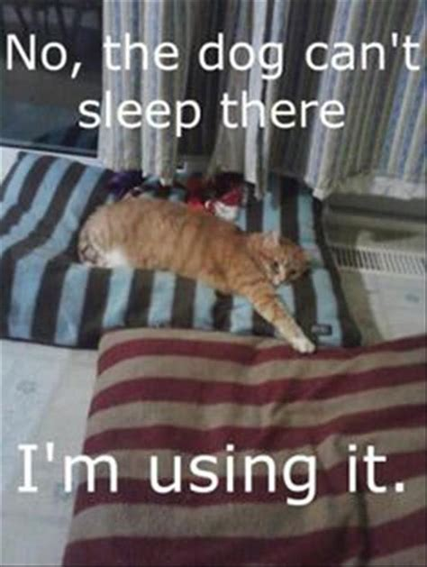 Animal In Bed Meme - funny animal pictures of the day 25 pics