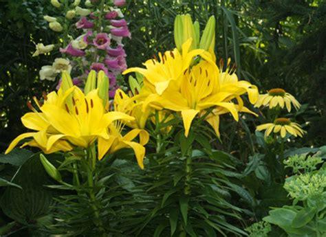 fernlea flowers  perennial garden