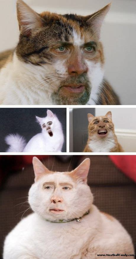 Cat Meme Faces - 20 best nicolas cage memes images on pinterest nicolas cage a bug s life and funny pics
