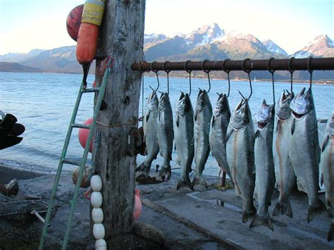 Crab Fishing Boat Jobs by Alaska Bristol Bay Salmon Fishing Asmi Video