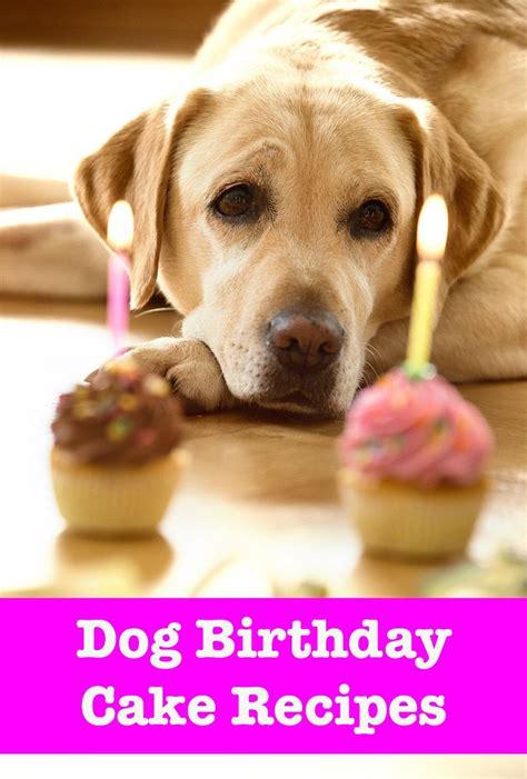 dog birthday cake recipes dog treats pinterest dog