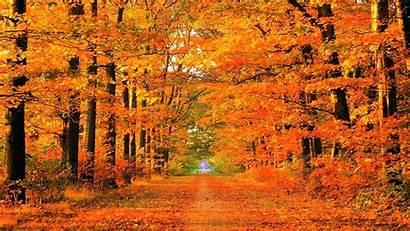 Season Fall Backgrounds Autumn Wallpapers Wallpapertag