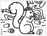 Coloring Nuts Acorns Template Popular Boowa Kwala Coloringhome sketch template