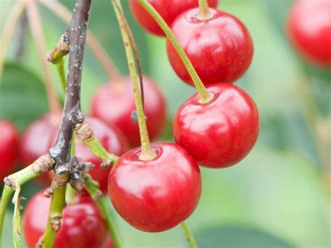 pin  hgtv  ideas  spring growing fruit trees