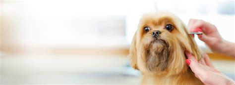 dog haircut sydney haircuts models ideas
