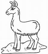 Coloring Llama Pages Printable Field Alpaca Cute Sheet Llamas Template Baby Printables Print Alpacas Google Pj Popular Kawaii Saints Adults sketch template