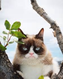 what is the cat grumpy cat realgrumpycat