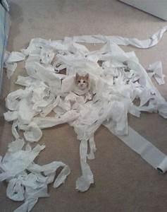Toilet Paper Cat – 1Funny.com