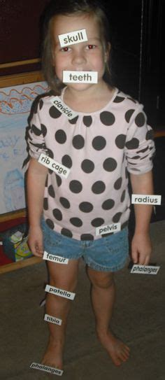 st grade science projects   human body