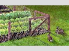 Keeping Rabbits Out of the Garden Bonnie Plants