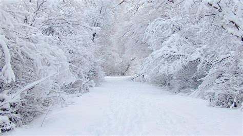 Free Winter Background by Winter Background Images 183 Free Awesome High