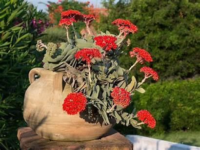 Plant Propeller Succulent Airplane Crassula Succulents Tips
