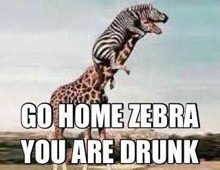Drunk Giraffe Meme - go home you re drunk funny pinterest