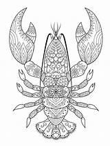 Lobster Crayfish sketch template