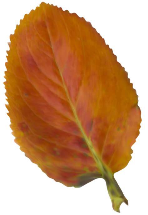clipart foto arbres feuilles