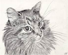 cat sketch cat pencil drawing by mintimelon on deviantart