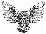 Owl Coloring Pages Owls Drawing Animals Raw Printable Adults Advanced Justcolor Adult Mandala Print Nature Incredible Children Animal Patterns Simple sketch template