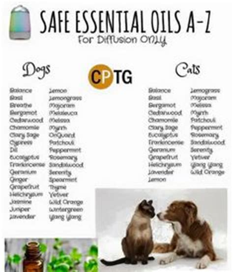 essential oils cats 1000 images about essential oils on pinterest doterra essential oils and doterra essential oils