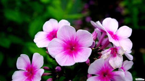 pictures of flowers and plants nature pictures flowering plants nature pictures flowers