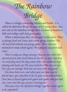 the rainbow bridge poem for cats 25 best ideas about rainbow bridge on