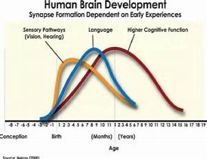 3  Neurophysiology Of Learning