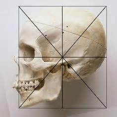 Female Skull Study Anatomy Pinterest