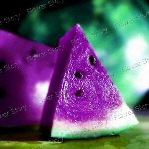 Beneficial 10 Purple Watermelon Seeds Excellent High In