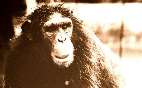 The Bili Ape of the Congo