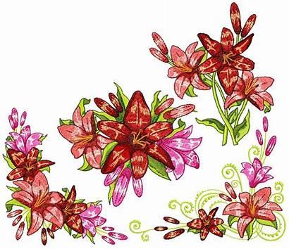 Fragrant Lilies X7 X10