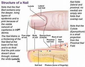 Proximal Nail Fold Infection