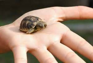 Acquaterrario per tartarughe guida completa