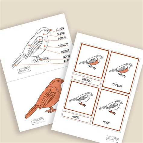 digitalna-podloga-ptica-klasifikacija