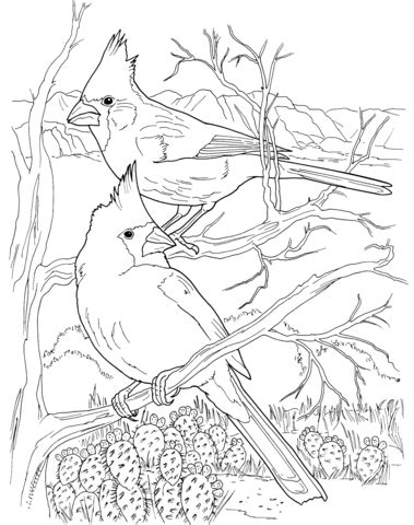 Desert Cardinals coloring page from Northern cardinal