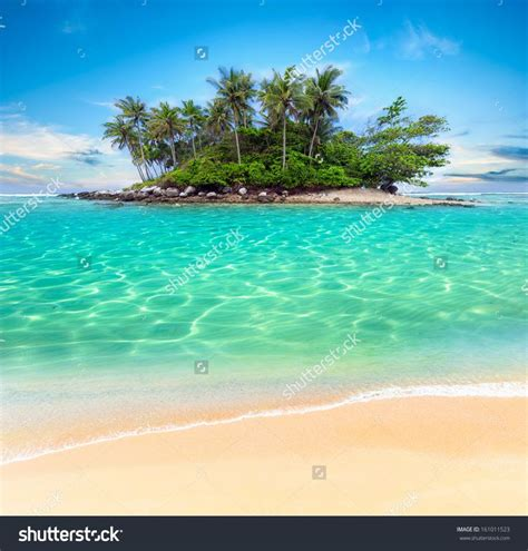 1000 images about tropical on desktop backgrounds palm trees and tropical wallpaper