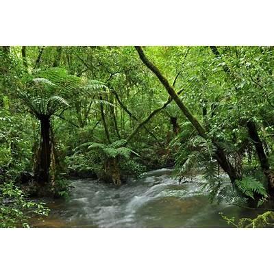 Atlantic Forest in BrazilInspirationsPinterest