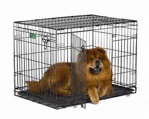 woman39s 5 day trip from florida to maine in van was an With best metal dog crate