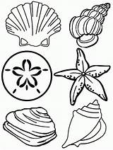 Coloring Pages Seashell Printable Sea Shell Colouring Olo Popular sketch template