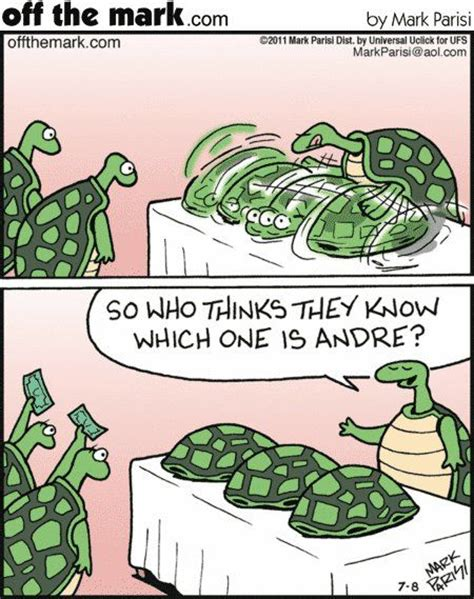 turtle humor offthemarkcom turtle obsession turtle