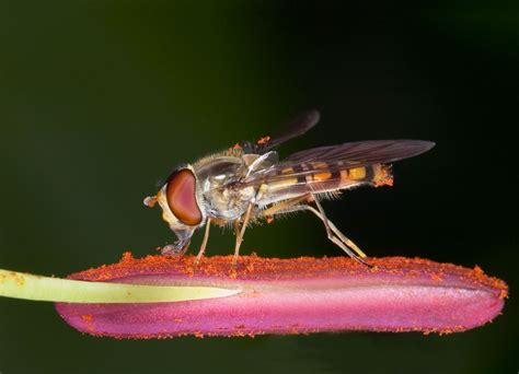 Fly  Animal Wildlife