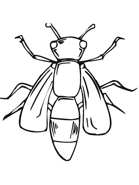 printable bug coloring pages  kids