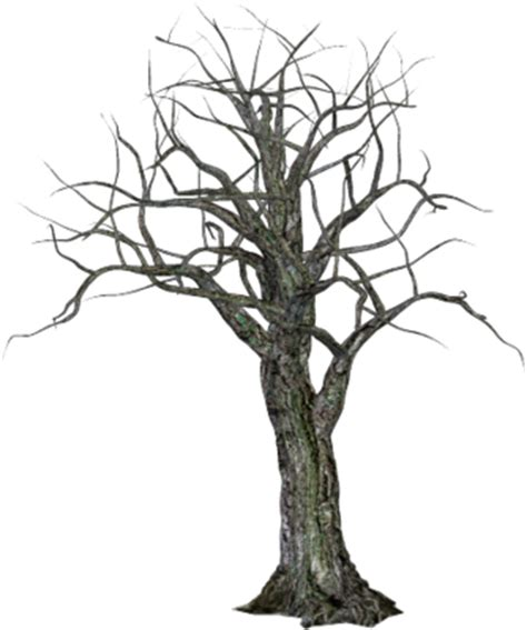 halloween spooky tree  psd psd