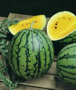 semangka kuning benih buah