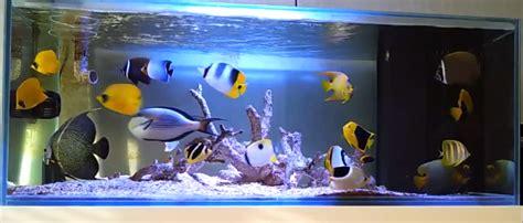 types  marine tank fo fowlr  reef