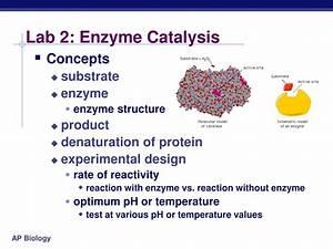 Ppt - Ap Biology Powerpoint Presentation