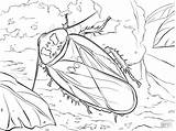 Coloring Cave Cockroach Pages Bat Drawing Printable Adult Bear Coloringbay Getdrawings Paper Categories sketch template